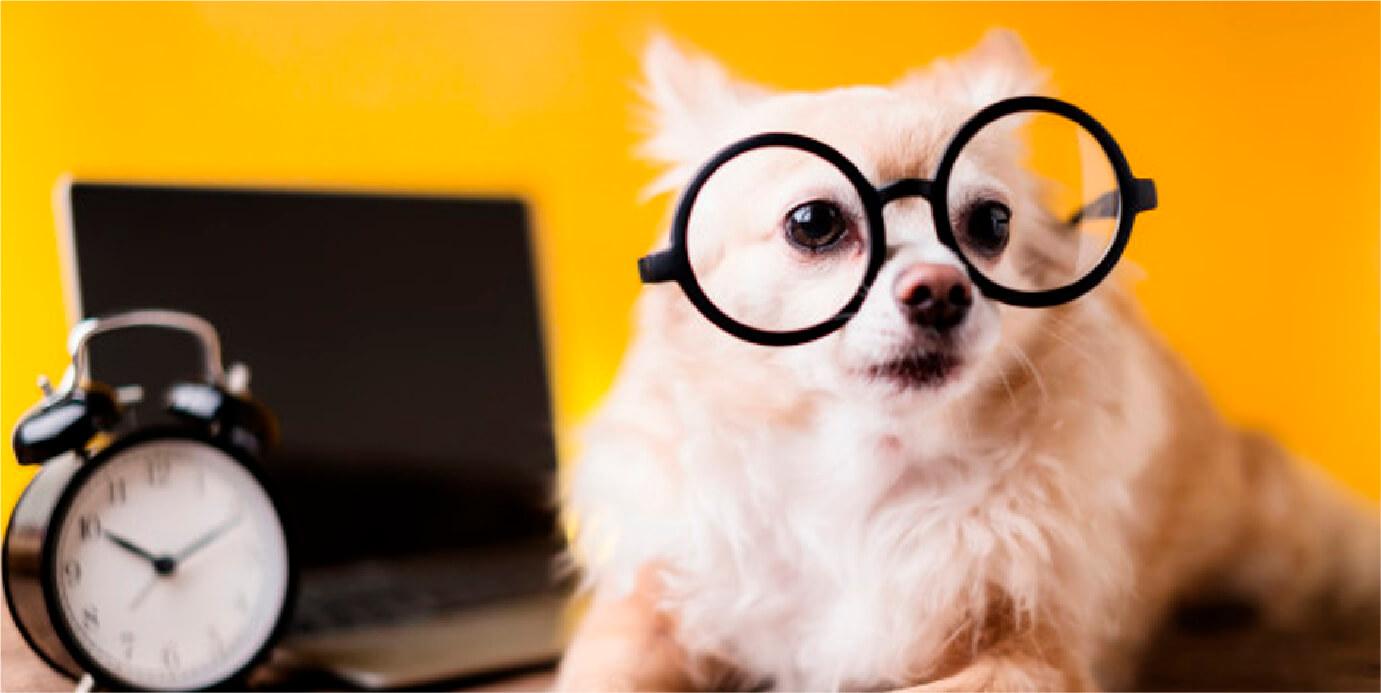 A novidade é aberta para todos os cãezinhos entre 3 e 12 anos